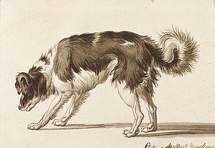 Jacob Philipp Hackert: Hundestudie, Neapel 1791, Feder und Pinsel auf starkem Bütten, schwarze Umrandungslinie, 125 : 171 mm ©Hessisches Landesmuseum Darmstadt, Foto: Wolfgang Fuhrmannek