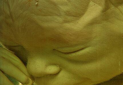 Menschlicher Embryo, 5 Monate (Ausschnitt) Hessisches Landesmuseum Darmstadt, Foto: Wolfgang Fuhrmannek, HLMD
