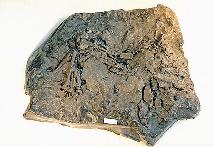 Geologische Präparation
