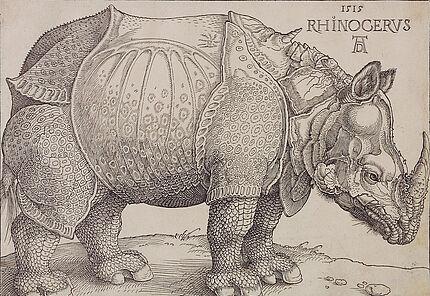 Albrecht Dürer Rhincerus (DasRhinozeros), 1515 Holzschnitt 212 : 200 mm ©Hessisches Landesmuseum Darmstadt, Foto: Wolfgang Fuhrmannek